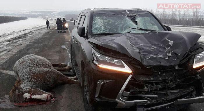 Осторожно, на дороге — лошади!  Autotat_1458074554_1